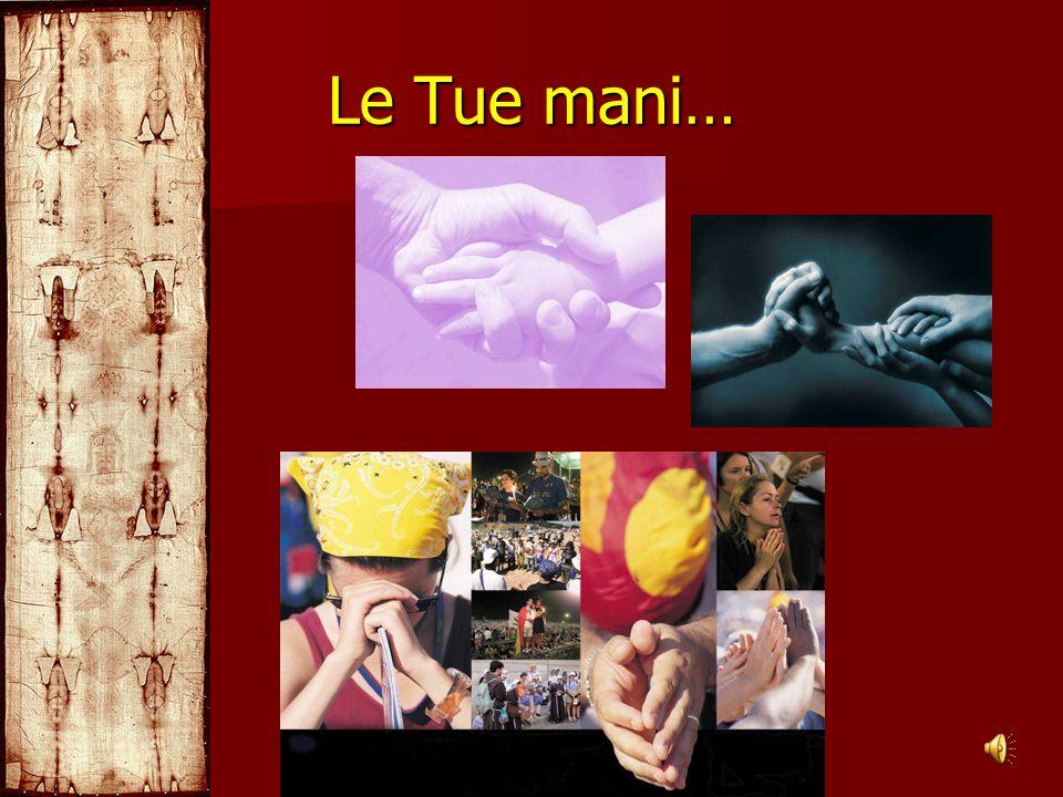 Le Tue mani…