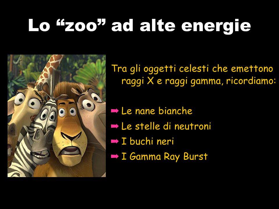 Lo zoo ad alte energie