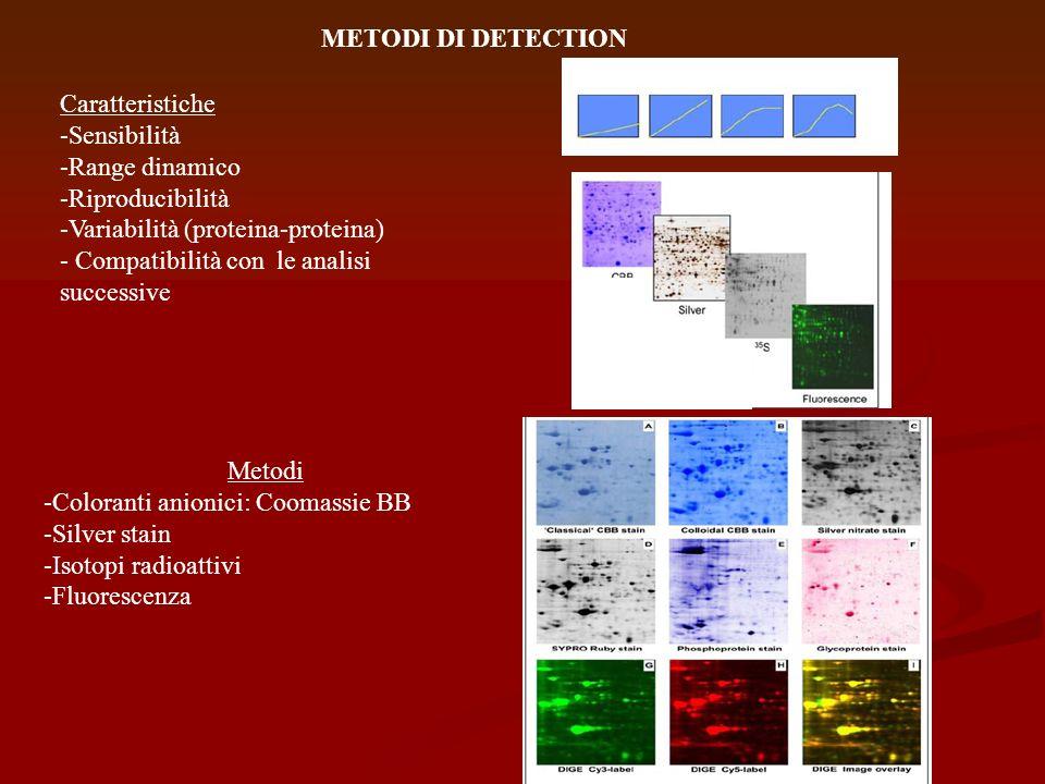 METODI DI DETECTIONCaratteristiche. -Sensibilità. -Range dinamico. -Riproducibilità. -Variabilità (proteina-proteina)