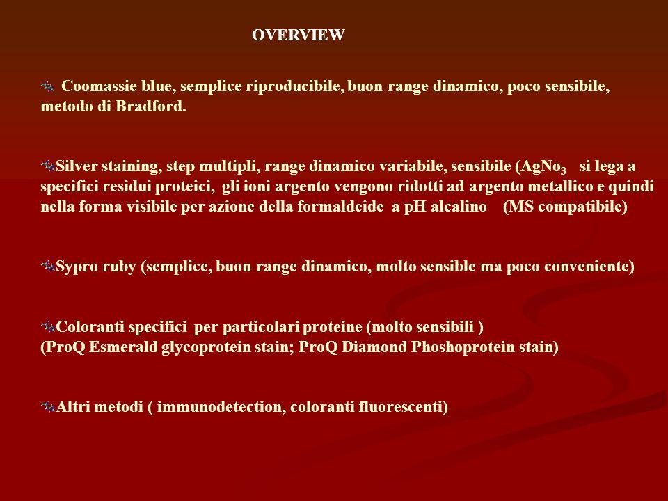 Altri metodi ( immunodetection, coloranti fluorescenti)