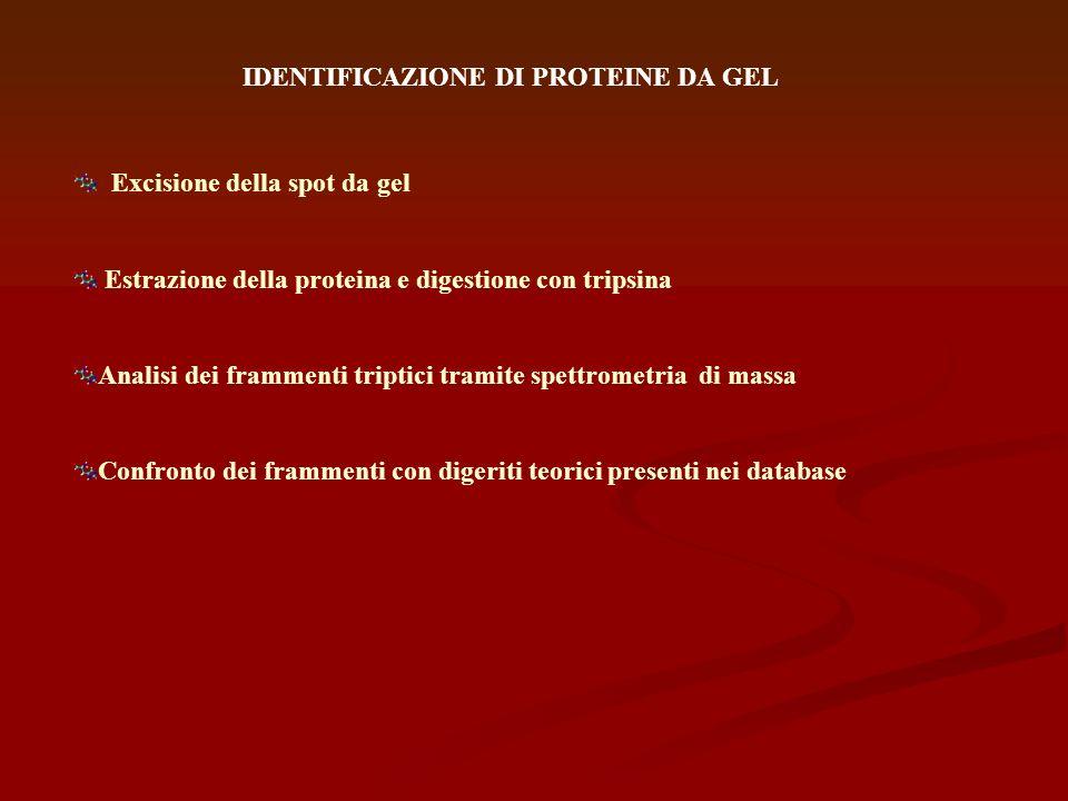 IDENTIFICAZIONE DI PROTEINE DA GEL
