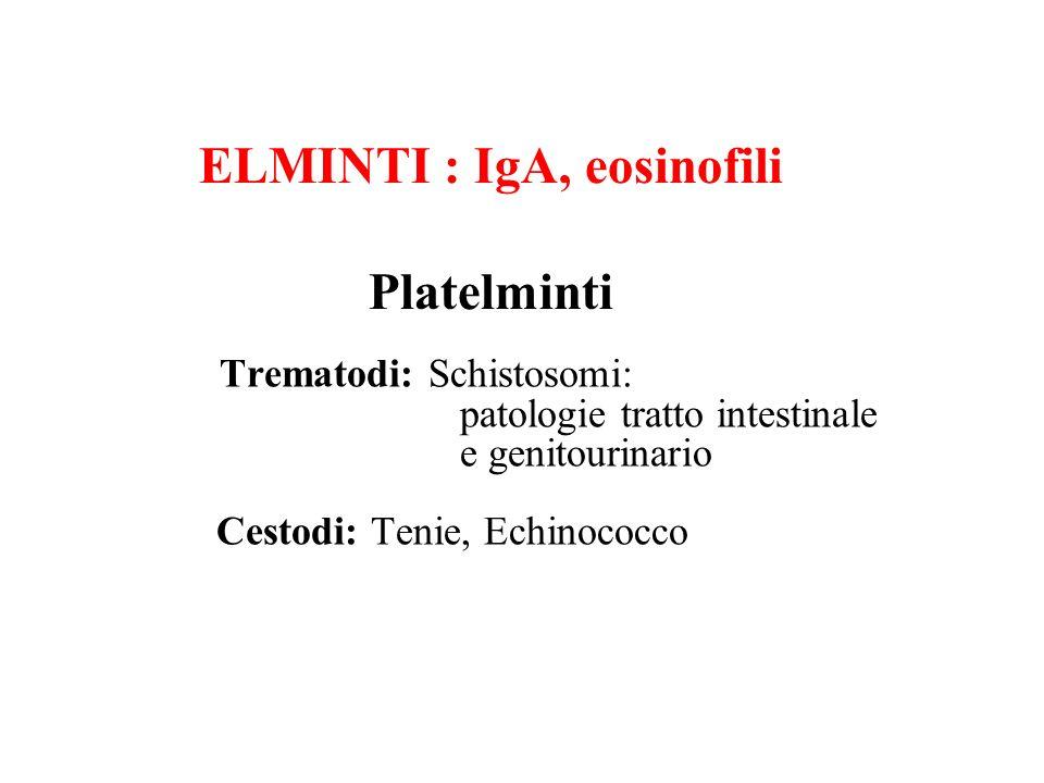 ELMINTI : IgA, eosinofili Platelminti
