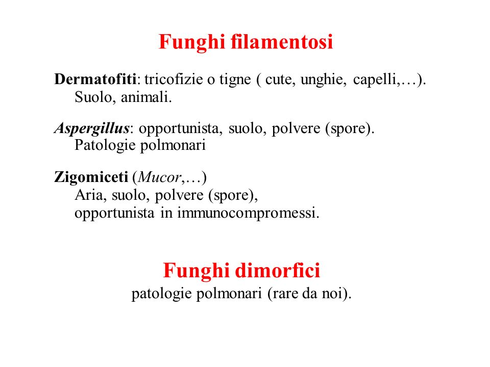 Funghi filamentosi Funghi dimorfici
