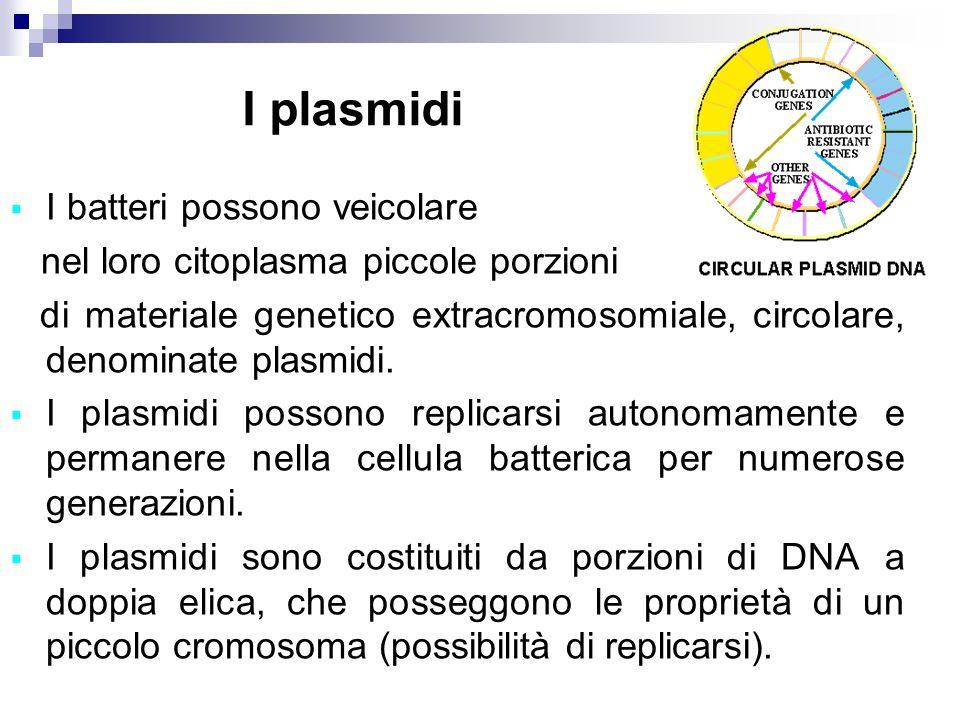 I plasmidi I batteri possono veicolare