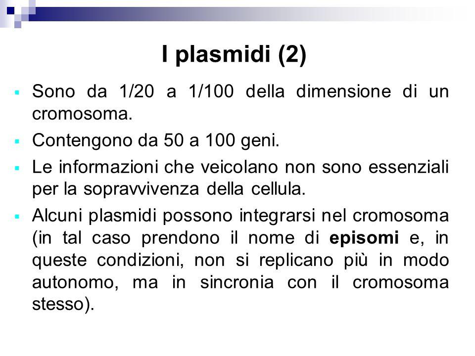I plasmidi (2) Sono da 1/20 a 1/100 della dimensione di un cromosoma.