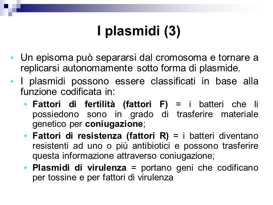 I plasmidi (3) Un episoma può separarsi dal cromosoma e tornare a replicarsi autonomamente sotto forma di plasmide.