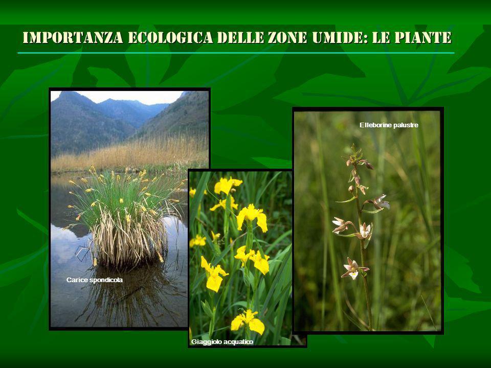 Importanza ecologica delle zone umide: le piante