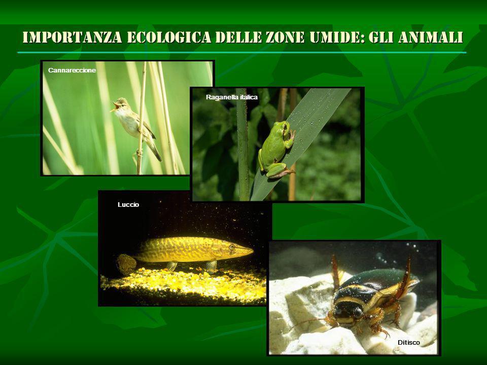 Importanza ecologica delle zone umide: gli animali