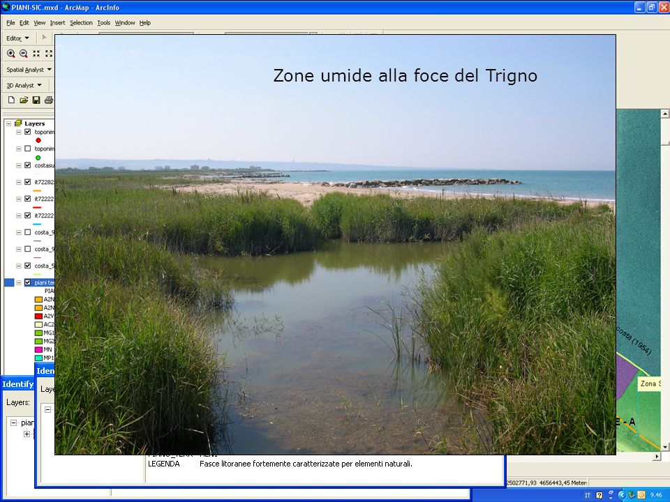 Zone umide alla foce del Trigno