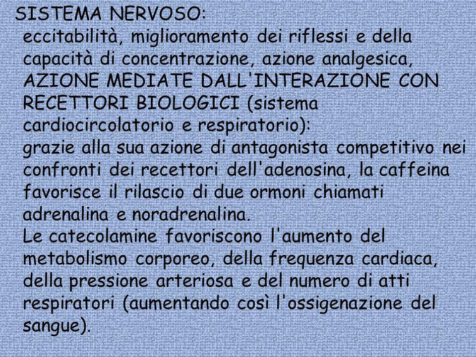SISTEMA NERVOSO: eccitabilità, miglioramento dei riflessi e della capacità di concentrazione, azione analgesica, AZIONE MEDIATE DALL INTERAZIONE CON RECETTORI BIOLOGICI (sistema cardiocircolatorio e respiratorio): grazie alla sua azione di antagonista competitivo nei confronti dei recettori dell adenosina, la caffeina favorisce il rilascio di due ormoni chiamati adrenalina e noradrenalina.