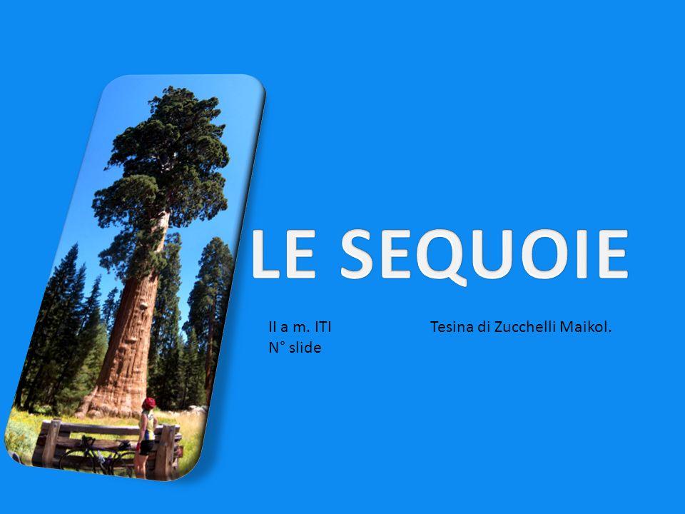 LE SEQUOIE II a m. ITI N° slide Tesina di Zucchelli Maikol.