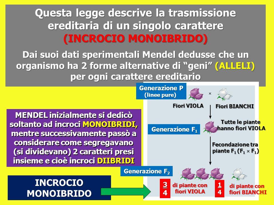 Questa legge descrive la trasmissione ereditaria di un singolo carattere (INCROCIO MONOIBRIDO)