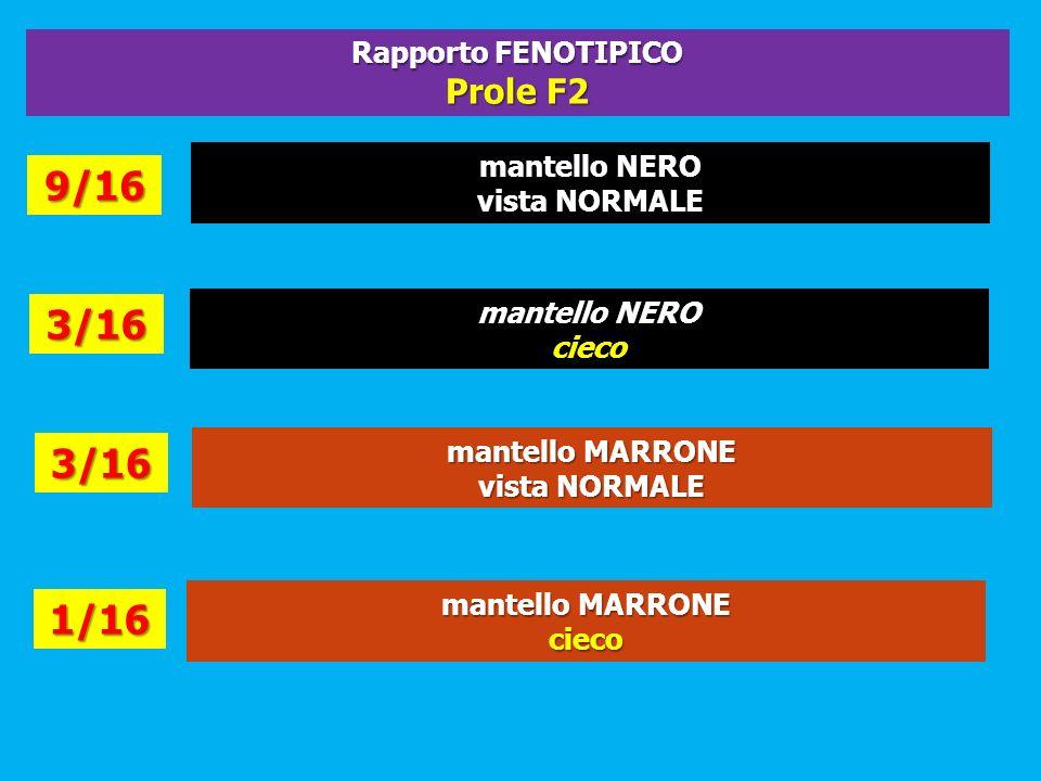 9/16 3/16 3/16 1/16 Prole F2 Rapporto FENOTIPICO mantello NERO