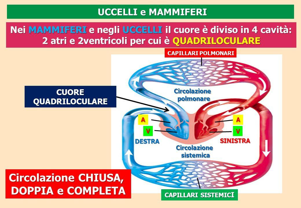 Circolazione CHIUSA, DOPPIA e COMPLETA