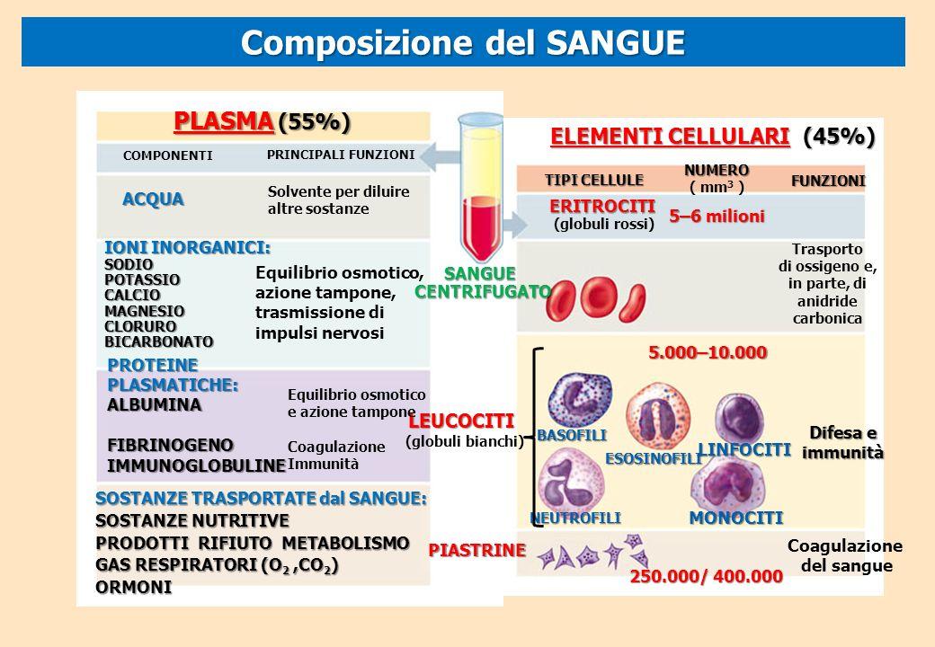 Biologia il corpo umano ppt scaricare for Equilibrio sinonimi