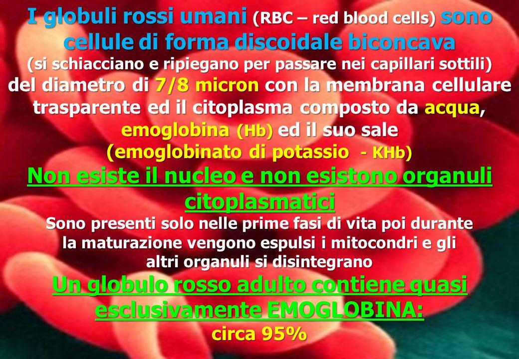 Non esiste il nucleo e non esistono organuli citoplasmatici