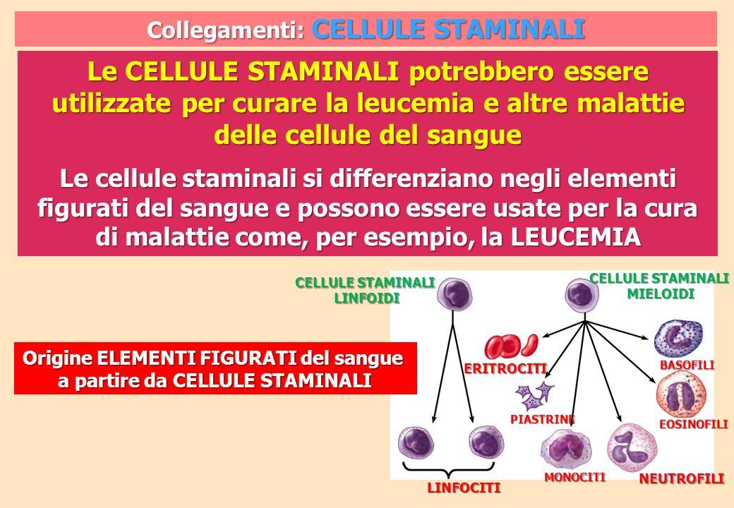 Collegamenti: CELLULE STAMINALI