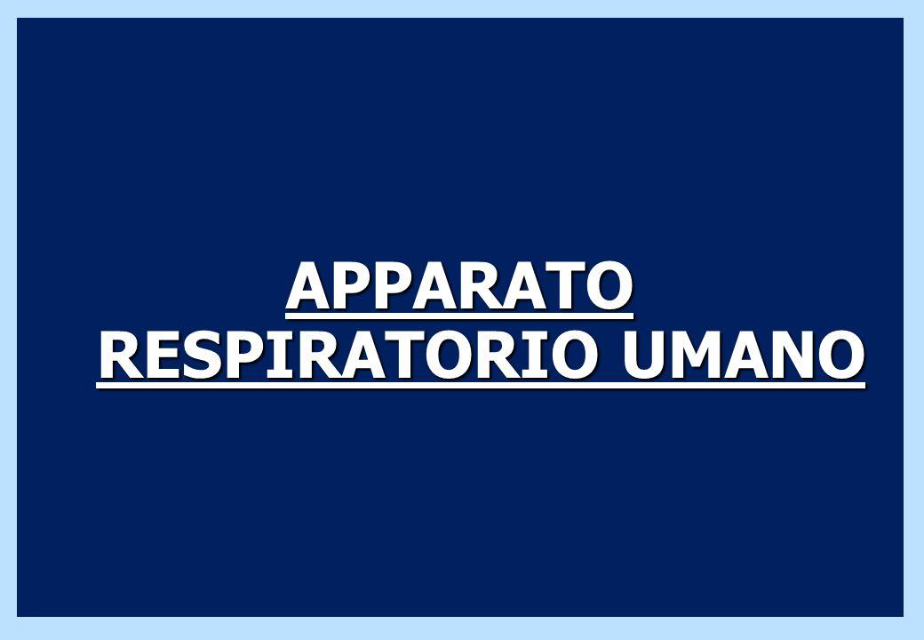 APPARATO RESPIRATORIO UMANO