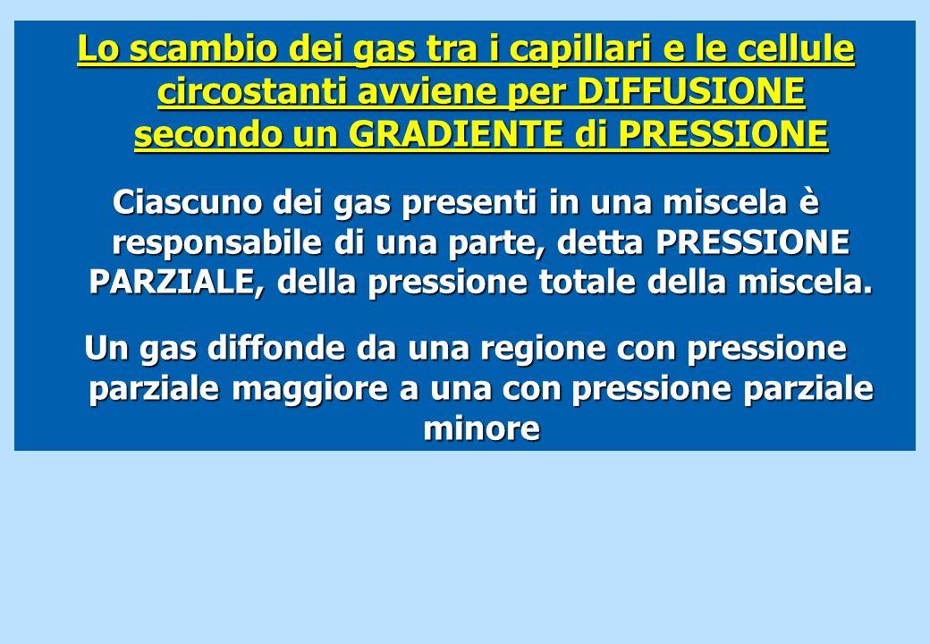 Lo scambio dei gas tra i capillari e le cellule circostanti avviene per DIFFUSIONE secondo un GRADIENTE di PRESSIONE