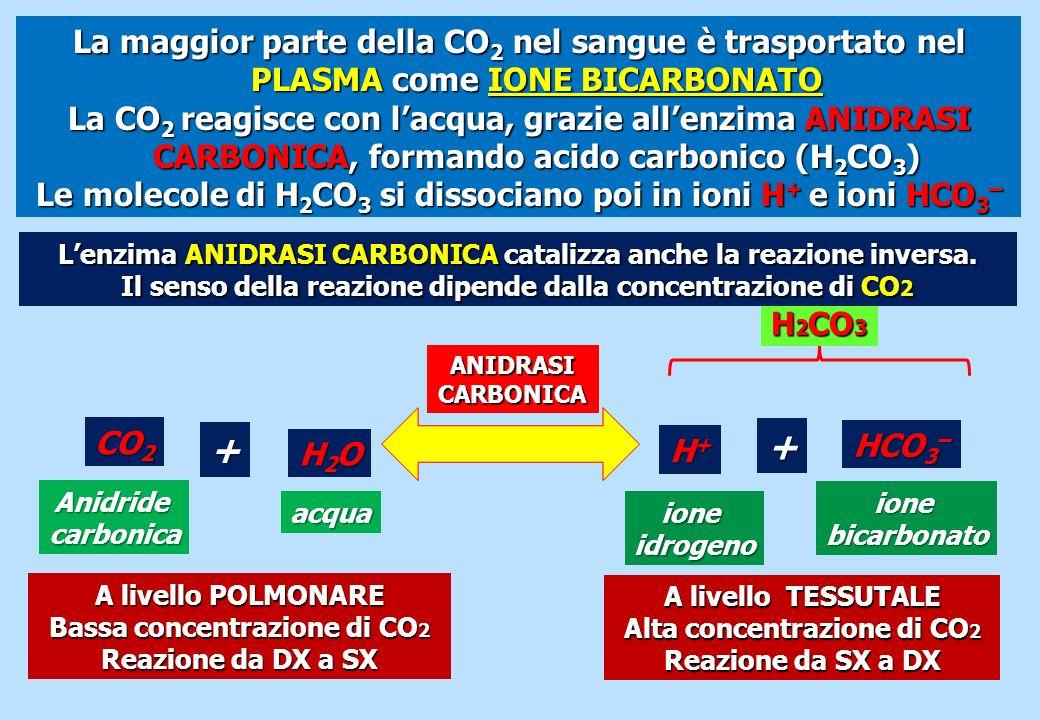 La maggior parte della CO2 nel sangue è trasportato nel PLASMA come IONE BICARBONATO