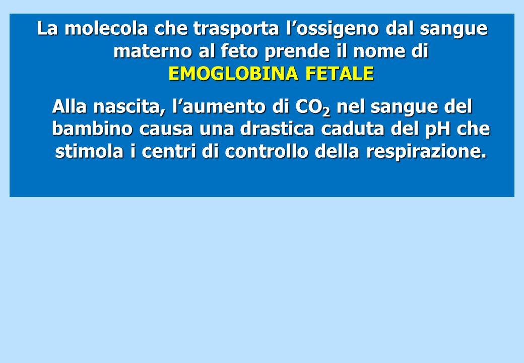 La molecola che trasporta l'ossigeno dal sangue materno al feto prende il nome di EMOGLOBINA FETALE