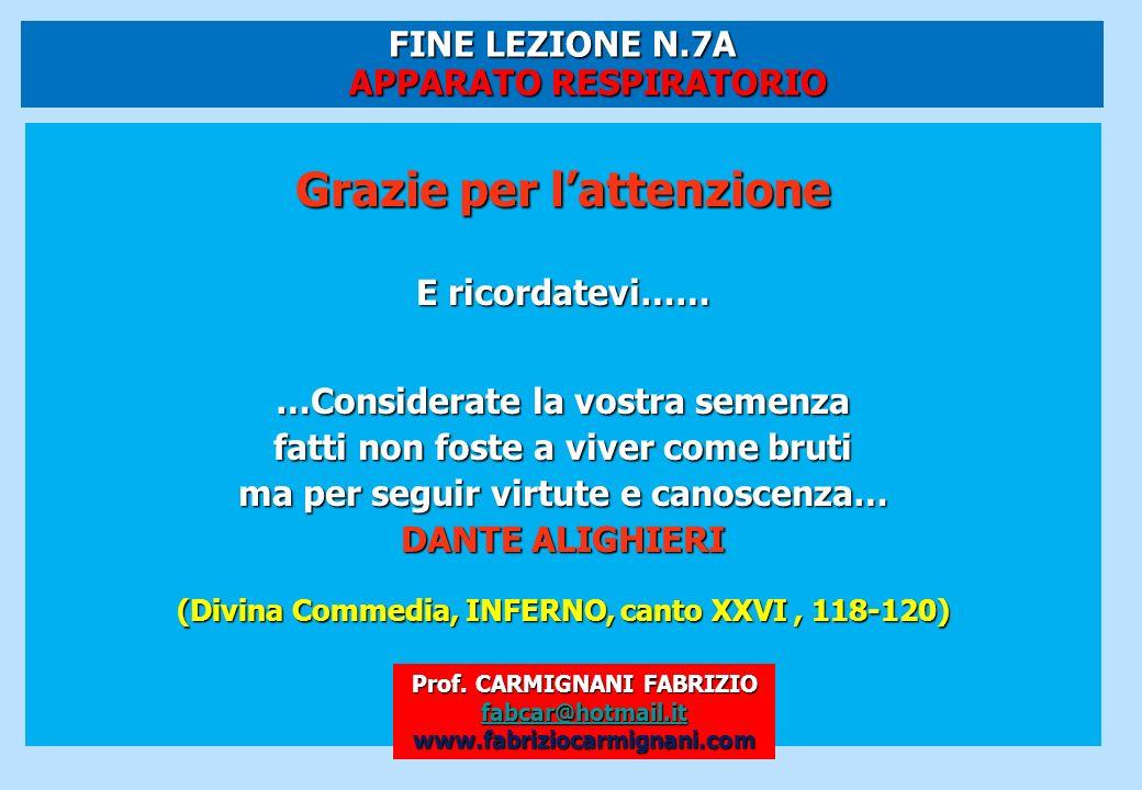 FINE LEZIONE N.7A APPARATO RESPIRATORIO