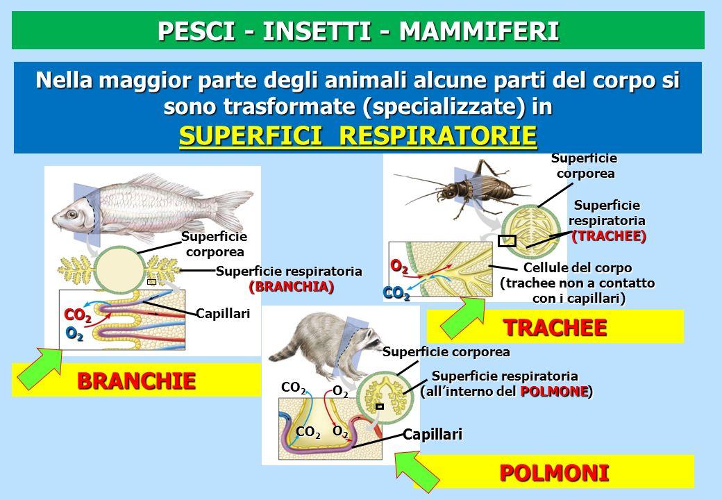 PESCI - INSETTI - MAMMIFERI