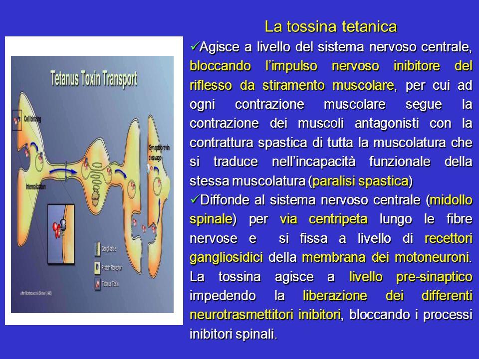La tossina tetanica