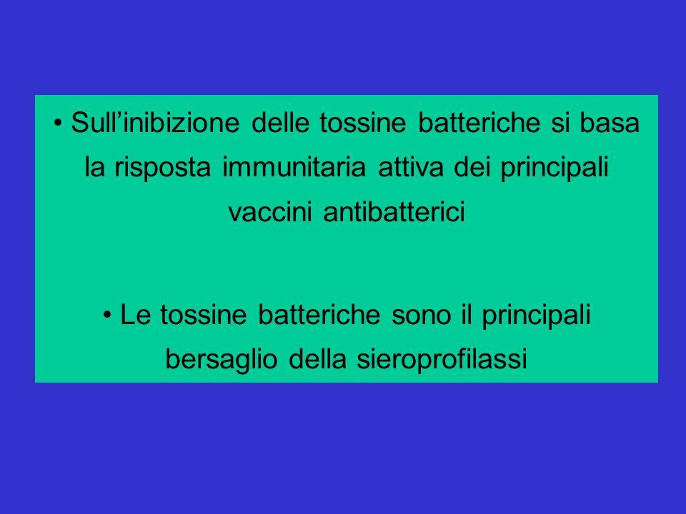 Sull'inibizione delle tossine batteriche si basa la risposta immunitaria attiva dei principali vaccini antibatterici