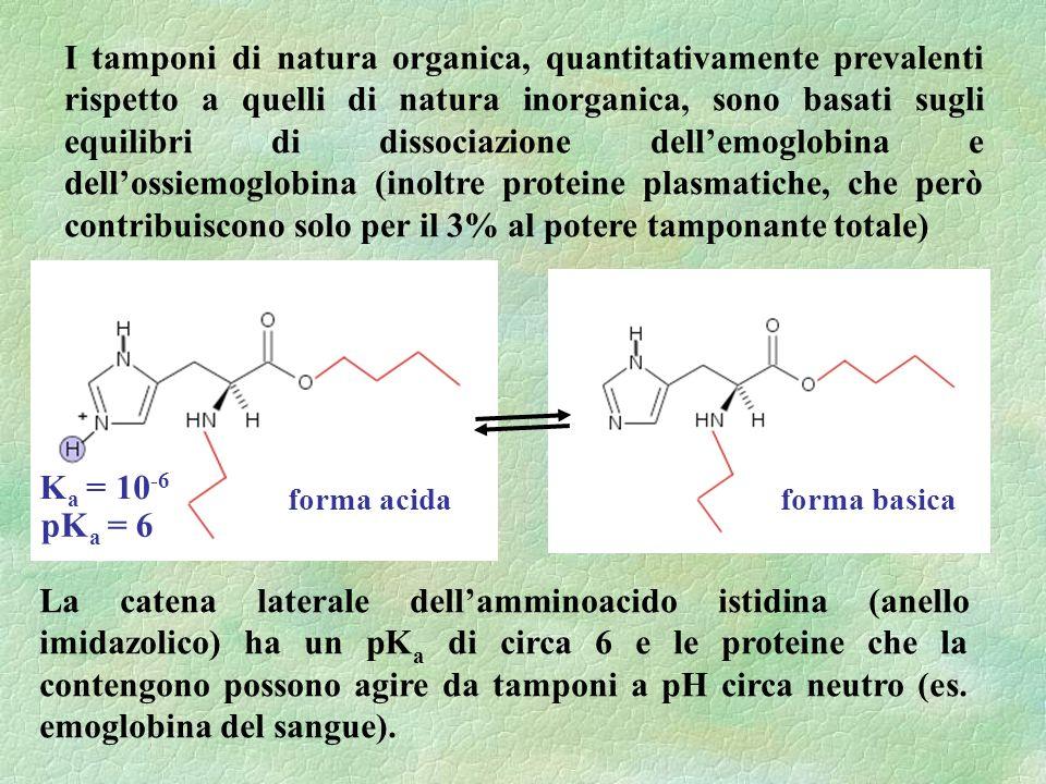 I tamponi di natura organica, quantitativamente prevalenti rispetto a quelli di natura inorganica, sono basati sugli equilibri di dissociazione dell'emoglobina e dell'ossiemoglobina (inoltre proteine plasmatiche, che però contribuiscono solo per il 3% al potere tamponante totale)