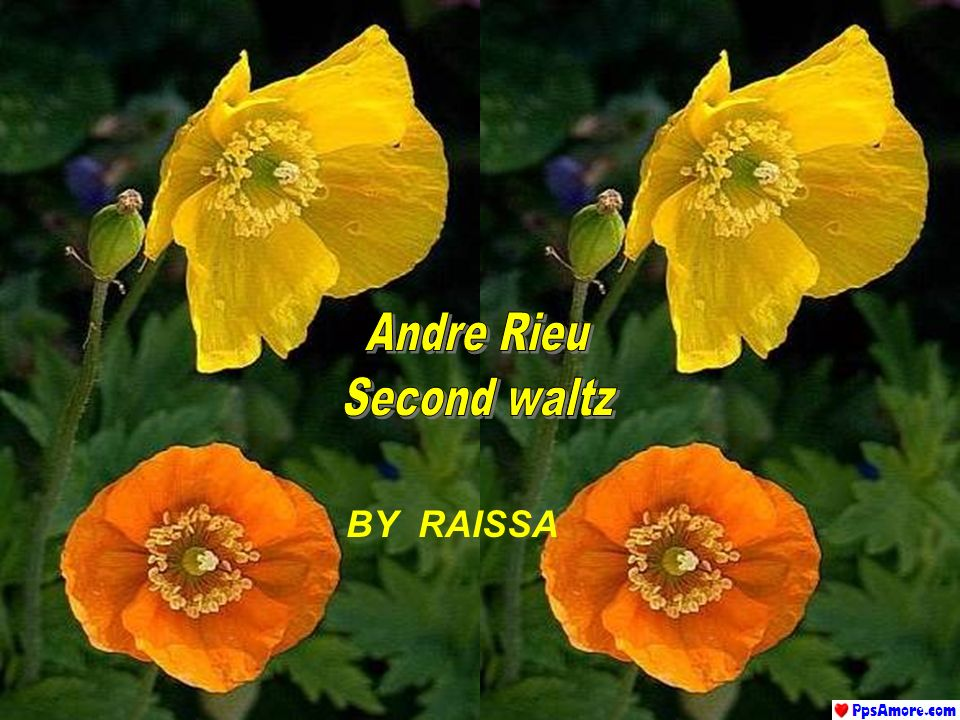 Andre Rieu Second waltz BY RAISSA