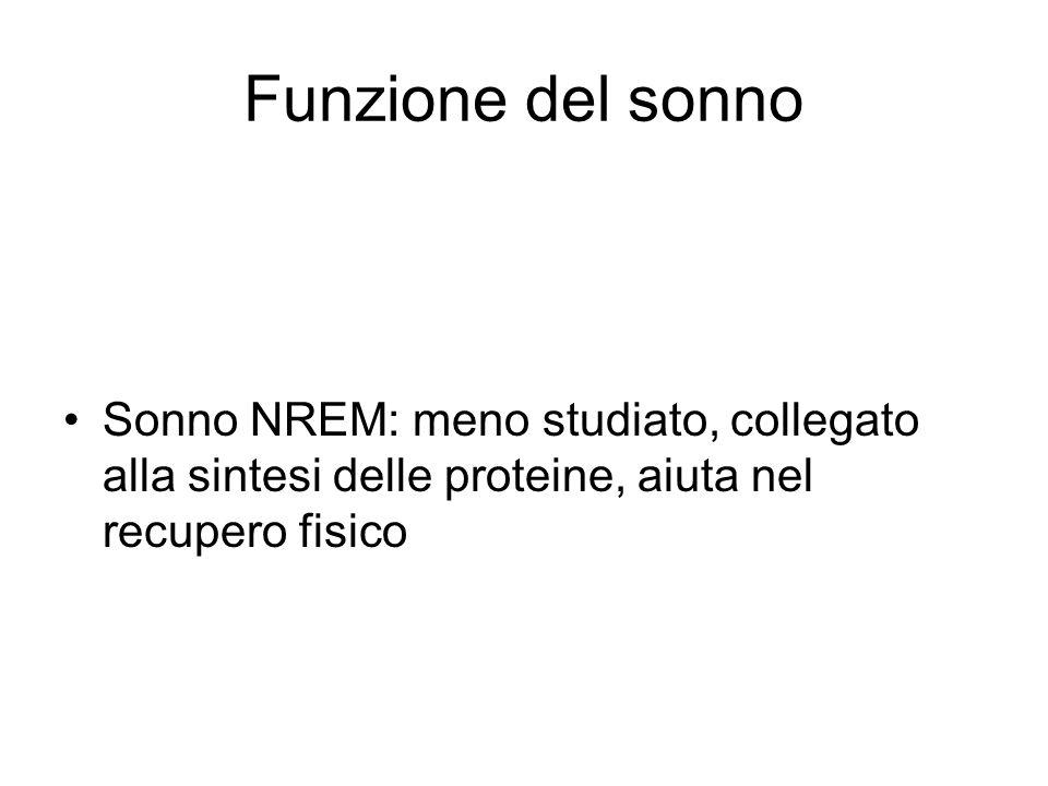 Funzione del sonno Sonno NREM: meno studiato, collegato alla sintesi delle proteine, aiuta nel recupero fisico.
