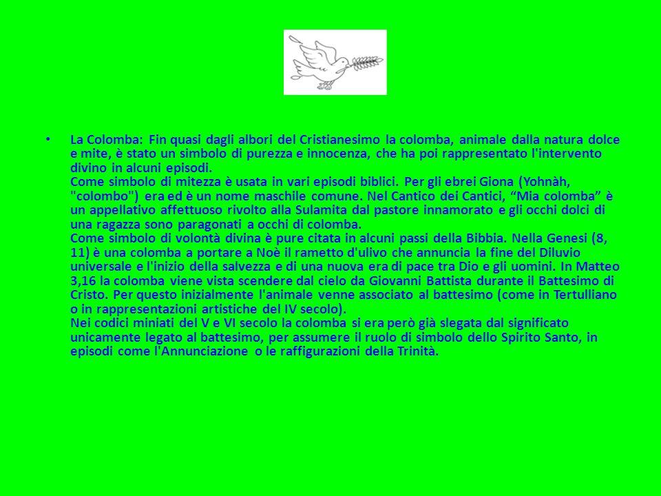 La Colomba: Fin quasi dagli albori del Cristianesimo la colomba, animale dalla natura dolce e mite, è stato un simbolo di purezza e innocenza, che ha poi rappresentato l intervento divino in alcuni episodi.