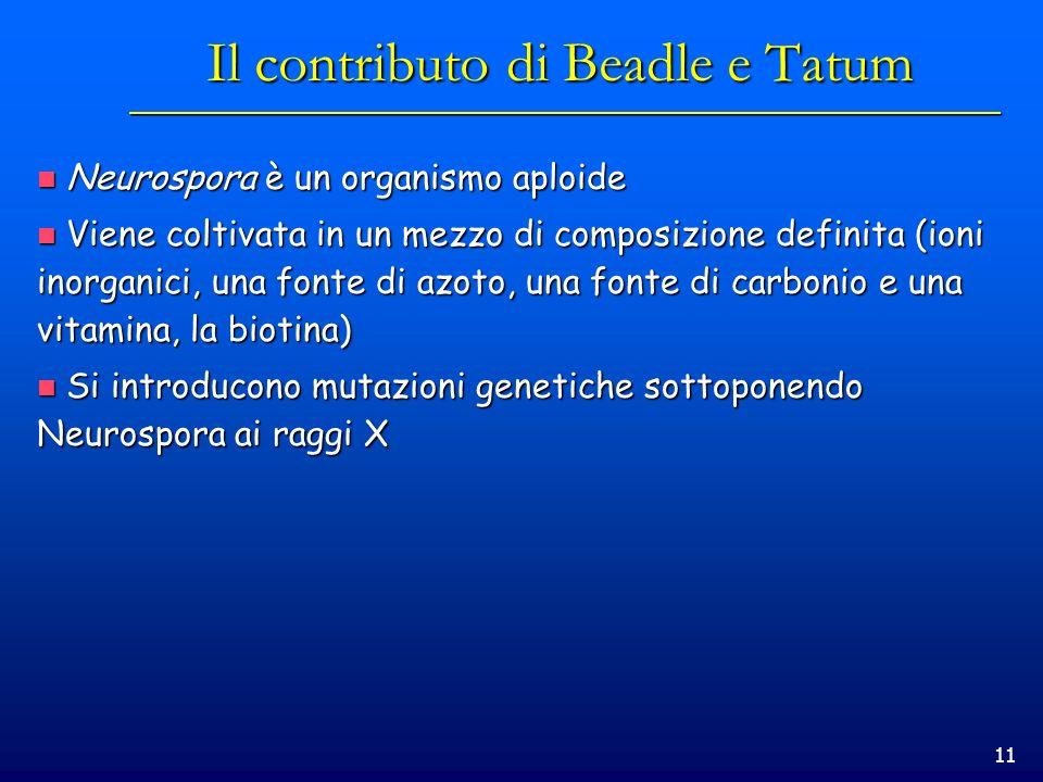 Il contributo di Beadle e Tatum
