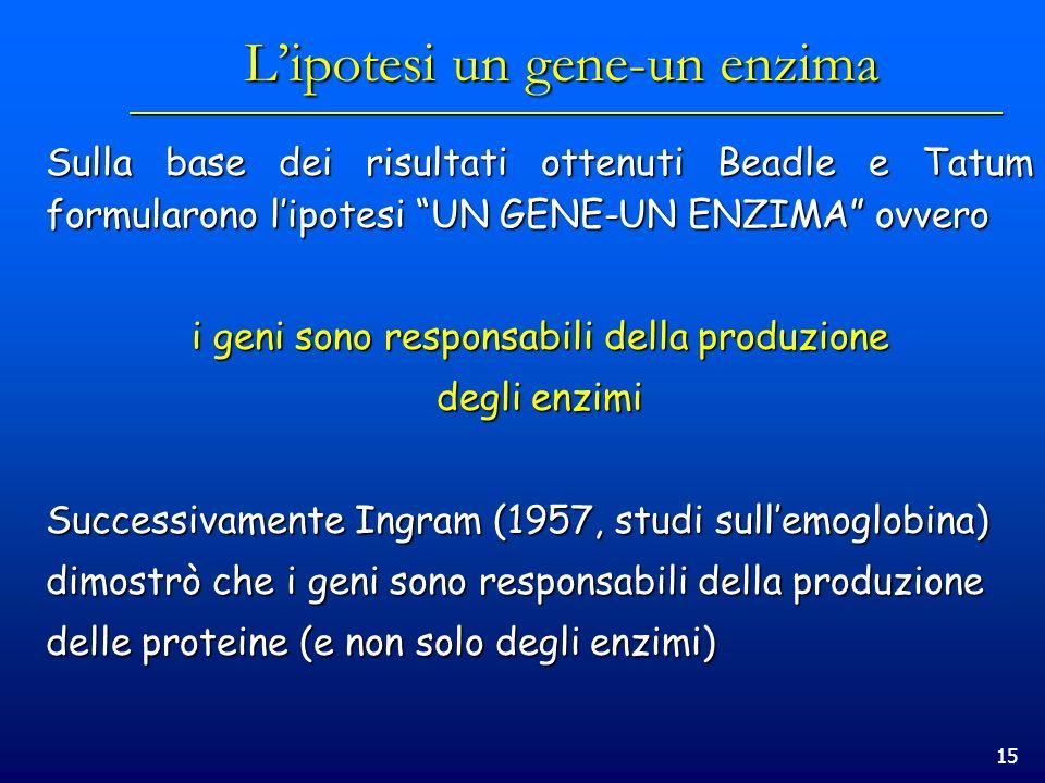 L'ipotesi un gene-un enzima