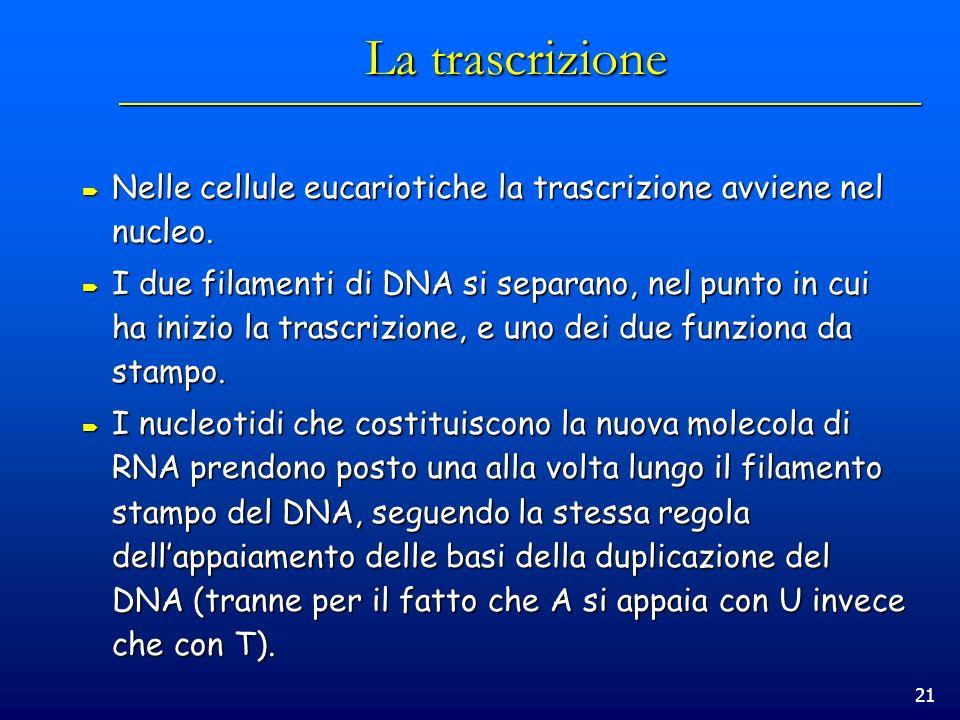 La trascrizione Nelle cellule eucariotiche la trascrizione avviene nel nucleo.
