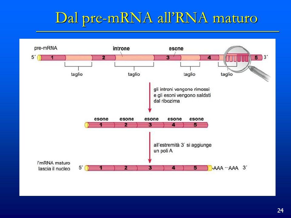 Dal pre-mRNA all'RNA maturo