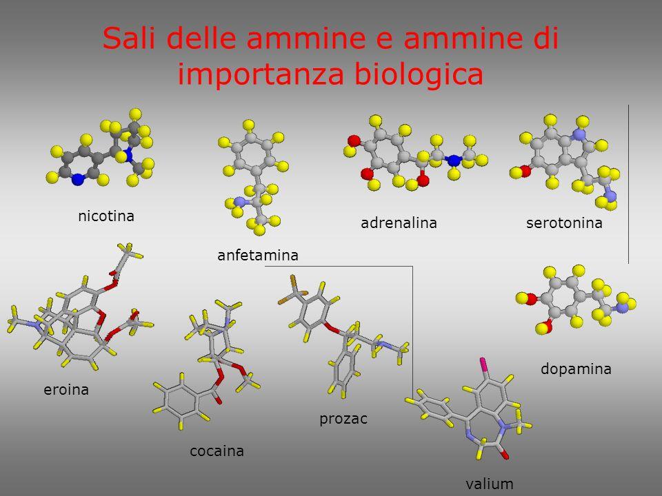 Sali delle ammine e ammine di importanza biologica