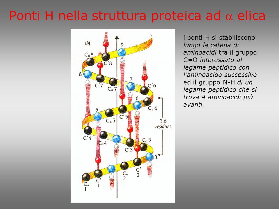 Ponti H nella struttura proteica ad a elica