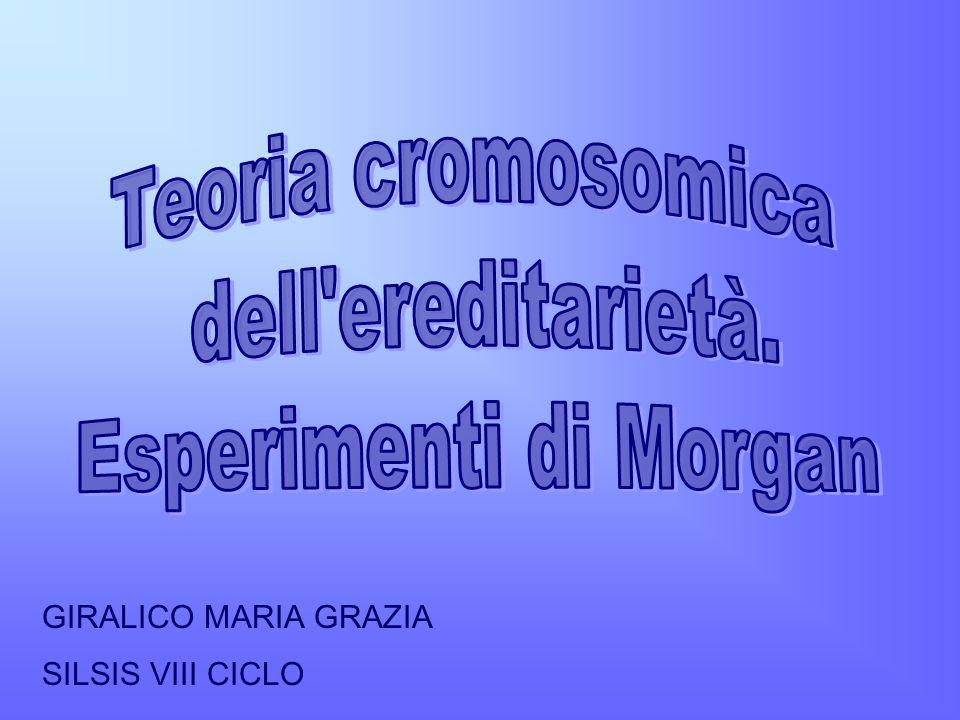 Teoria cromosomica dell ereditarietà. Esperimenti di Morgan