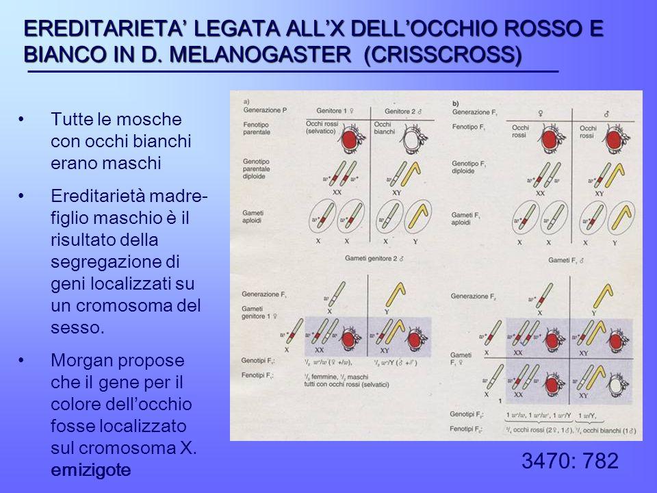 EREDITARIETA' LEGATA ALL'X DELL'OCCHIO ROSSO E BIANCO IN D