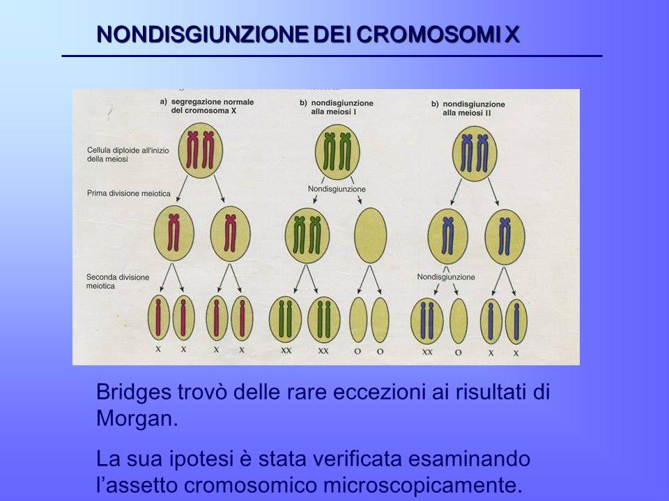 NONDISGIUNZIONE DEI CROMOSOMI X
