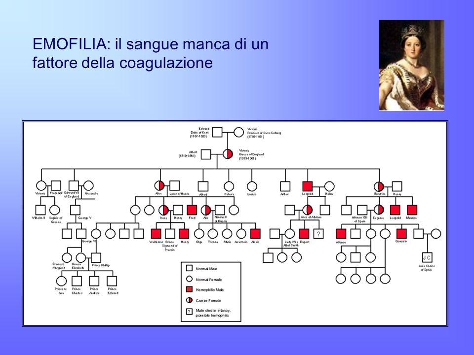 EMOFILIA: il sangue manca di un fattore della coagulazione