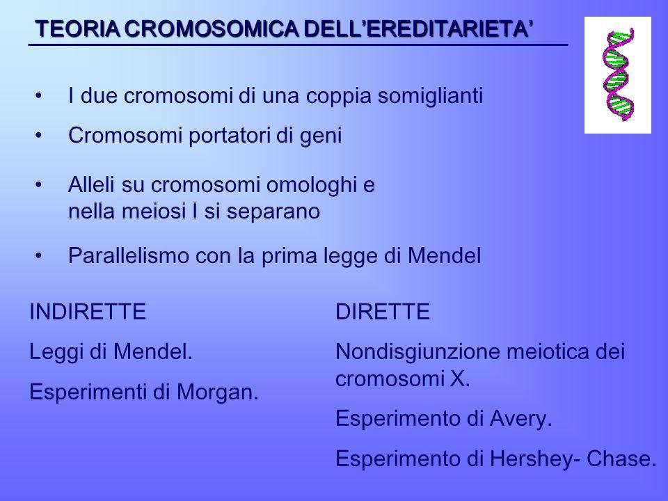 TEORIA CROMOSOMICA DELL'EREDITARIETA'