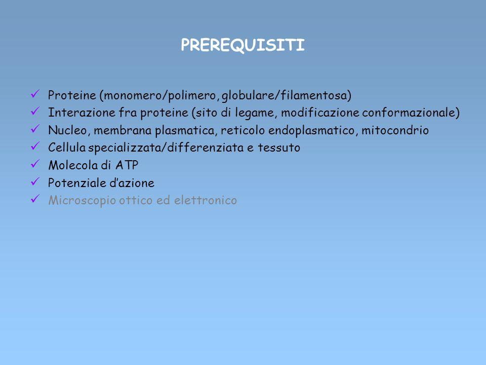PREREQUISITI Proteine (monomero/polimero, globulare/filamentosa)