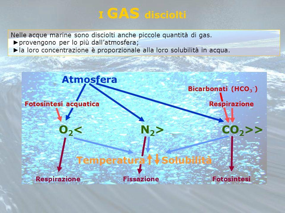 O2< N2> CO2>>