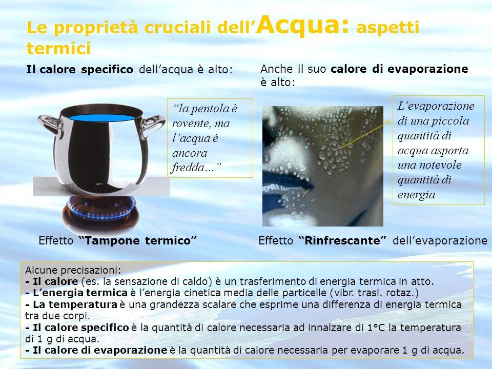 Le proprietà cruciali dell'Acqua: aspetti termici