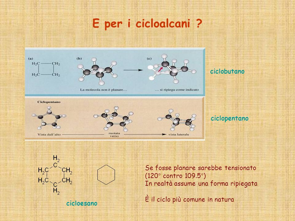 E per i cicloalcani ciclobutano ciclopentano