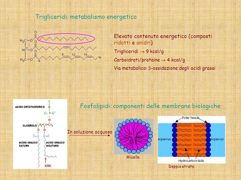 Trigliceridi: metabolismo energetico