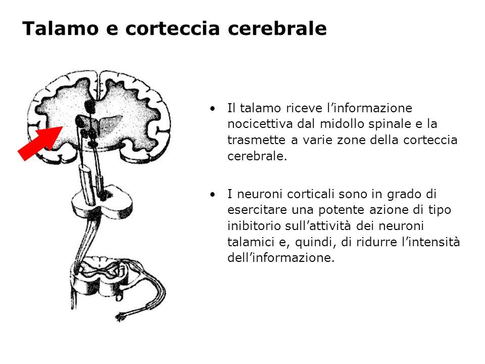 Talamo e corteccia cerebrale